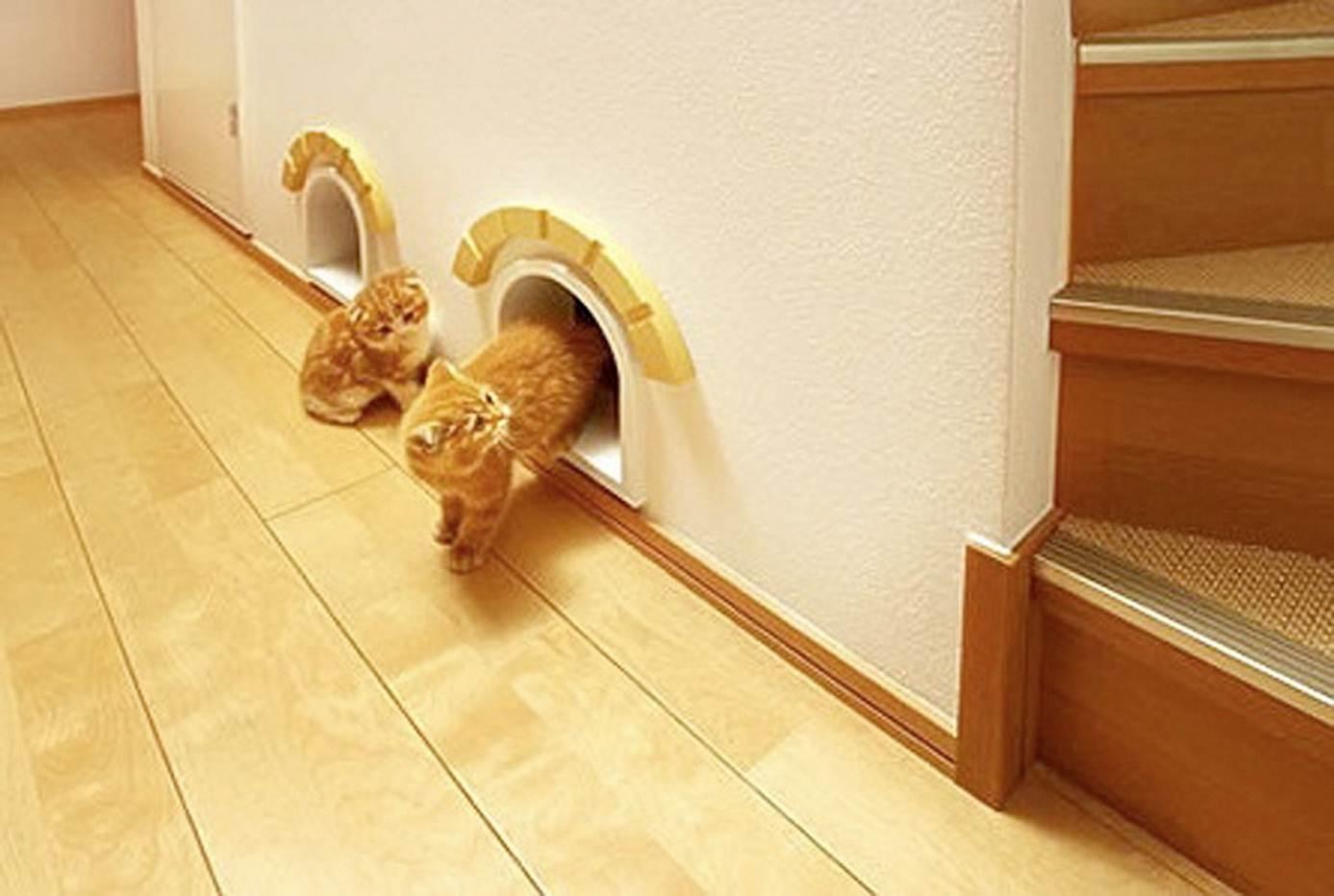 Дверь для кошки : своими руками или готовый вариант? Ваши Питомцы 77
